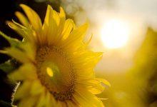 为什么新西兰靠南地区的年阳光照射时间比较短?