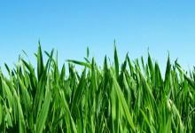 如何在新西兰的冬季保养草坪?